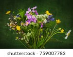 still life beautiful wild... | Shutterstock . vector #759007783