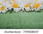 still life of white daisies.... | Shutterstock . vector #759008047