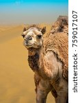 camel closeup portrait in windy ... | Shutterstock . vector #759017107