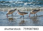 three marbled godwits  limosa... | Shutterstock . vector #759087883