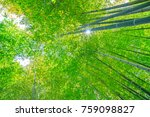 Green Bamboo Background. From...