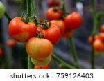 a tomato is a nutrient dense... | Shutterstock . vector #759126403