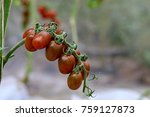 a tomato is a nutrient dense... | Shutterstock . vector #759127873