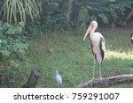 painted stork in green water... | Shutterstock . vector #759291007