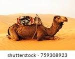 camel caravan going through the ...   Shutterstock . vector #759308923