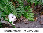 Small photo of cute white rabbit skulk in trees. a plant-eating mammal with long ears, long hind legs, and a short tail.