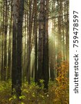 sun rays breaking through trees ... | Shutterstock . vector #759478597
