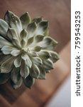 succulent in pot on wooden... | Shutterstock . vector #759543253