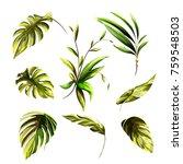 illustration of tropical leaves.... | Shutterstock .eps vector #759548503