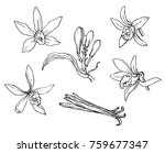 ink  pencil   the leaves and... | Shutterstock .eps vector #759677347