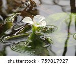 Stock photo flower flower in the water isolated flower flower isolated 759817927