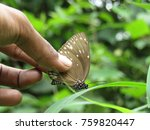 Stock photo butterfly on the hands butterfly isolated 759820447
