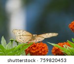 Stock photo butterfly on hands baby butterfly baby footprint butterfly butterfly isolated 759820453