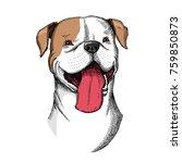 cute american bulldog head...   Shutterstock .eps vector #759850873