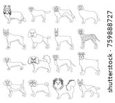 dog  pooch  breed  and other... | Shutterstock . vector #759888727