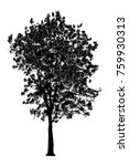 tree silhouettes  isolated... | Shutterstock . vector #759930313