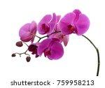 Beautiful Purple Phalaenopsis...