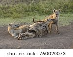 female spotted hyenas with cubs ... | Shutterstock . vector #760020073