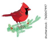 northern cardinal  vector ... | Shutterstock .eps vector #760047997