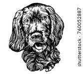 dog spaniel pet hand drawn... | Shutterstock .eps vector #760052887