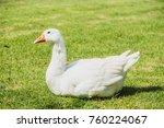 white goose bird on green field | Shutterstock . vector #760224067