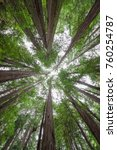 standing under a canopy of...   Shutterstock . vector #760254787