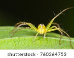a wolf spider perched on a... | Shutterstock . vector #760264753