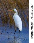 big white heron. great egret.... | Shutterstock . vector #760312987