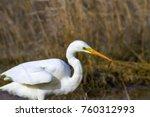 big white heron. great egret.... | Shutterstock . vector #760312993