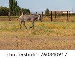 plains zebra  equus quagga ... | Shutterstock . vector #760340917