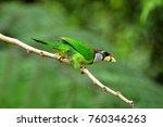 a tropical bird  the fire... | Shutterstock . vector #760346263