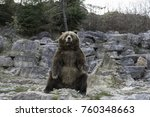 canadian grizzly bear | Shutterstock . vector #760348663