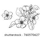 ink  pencil   the leaves and... | Shutterstock .eps vector #760570627