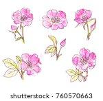 ink  pencil  watercolor wild... | Shutterstock .eps vector #760570663