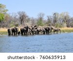 elephant drinking in the shire... | Shutterstock . vector #760635913
