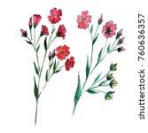 wildflower flax flower in a... | Shutterstock . vector #760636357