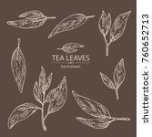 collection of tea lieves. green ... | Shutterstock .eps vector #760652713
