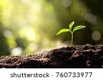 the seedling are growing from... | Shutterstock . vector #760733977