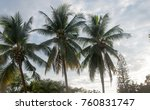 coconut palm tree | Shutterstock . vector #760831747