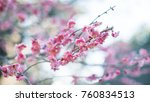beautiful sakura blooming | Shutterstock . vector #760834513