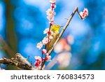 the japanese white eye.the... | Shutterstock . vector #760834573
