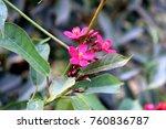 pink flowers. photography | Shutterstock . vector #760836787