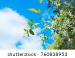 fresh green leaf with clear... | Shutterstock . vector #760838953