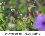 little flower and selective... | Shutterstock . vector #760842847