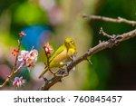 the japanese white eye and... | Shutterstock . vector #760845457