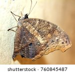 beautiful butterfly isolated | Shutterstock . vector #760845487