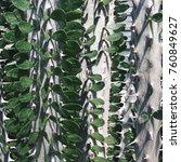 cactus texture at doi anglang ... | Shutterstock . vector #760849627