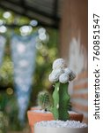 cactus cactus in a potted plant ... | Shutterstock . vector #760851547