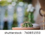 cactus cactus in a potted plant ... | Shutterstock . vector #760851553