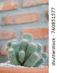 cactus cactus in a potted plant ... | Shutterstock . vector #760851577
